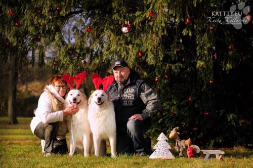 Maremmánsko Abruzský pastevecký pes Vánoce 2020